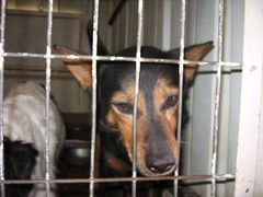 a jailed dog